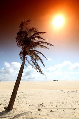 palm in yellow sunrise sky Stock Photo - 4701605