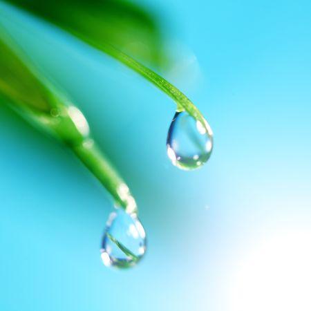 sun drop: water drop shine in sun light
