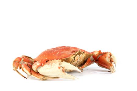 dungeness crab isolated on white Stock Photo - 4975635