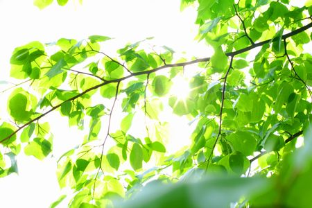 incredible green leaf foliage nature gbackground Stock Photo - 4977457