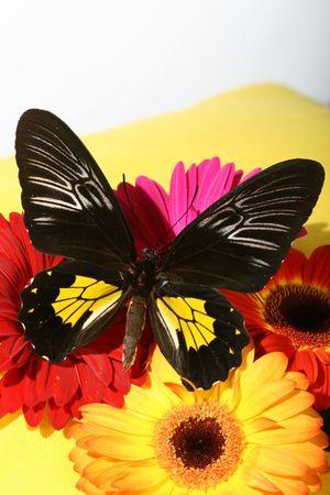 beautiful butterfly on fresh flower photo
