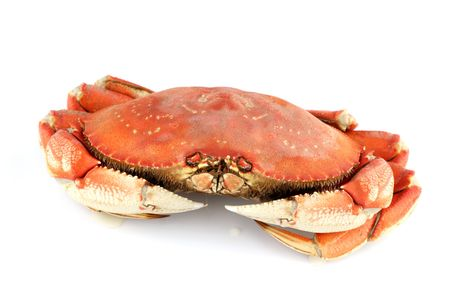 dungeness crab isolated on white Stock Photo - 4996143