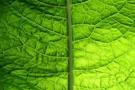 summer green leaf macro close up Stock Photo - 4996412