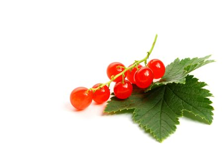 red currant: red currant isolated on white background