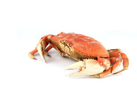 dungeness crab isolated on white Stock Photo - 5005025