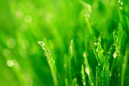 water druppels op gras blade aard achtergrond