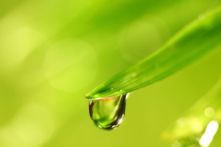 big water drop on grass blade Imagens