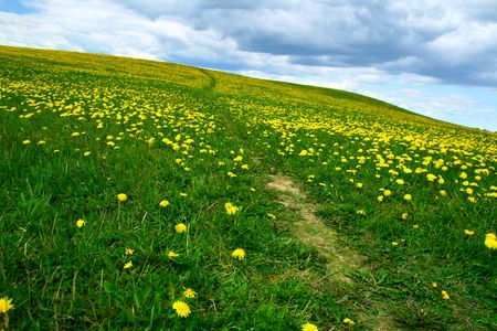 dandelion field green and yellow colors lanscape Stock Photo - 5019831
