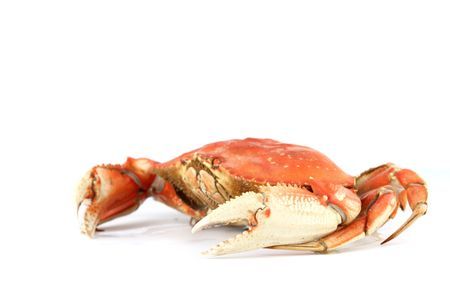 dungeness crab isolated on white Stock Photo - 5019241
