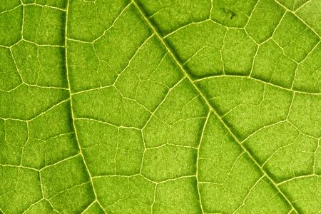 green leaf close up nature background Stock Photo - 5020292