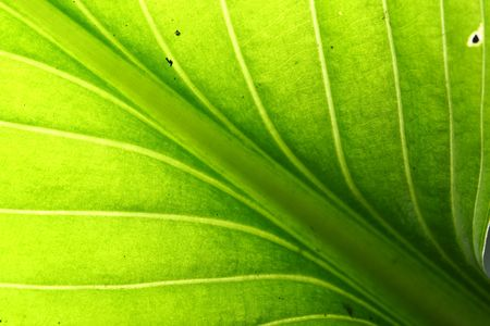 green leaf vein macro close up Stock Photo - 5020407