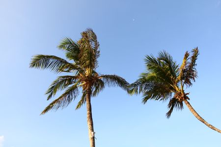 palm green foliage  in blue sky Stock Photo - 5019496