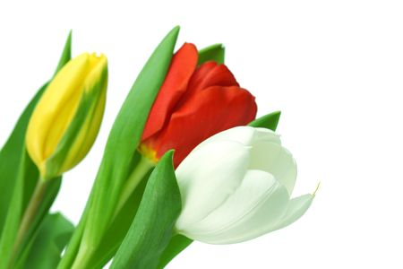 colorful tulips close up holiday background Stock Photo - 5019856