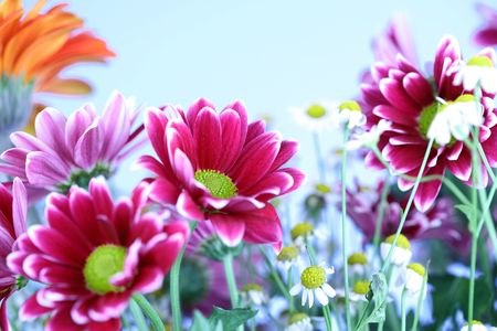 colourful summer flowers close up photo