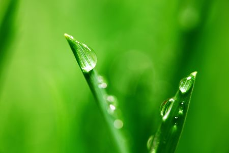 big water drop on grass blade Stock Photo - 5955857