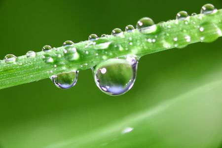 big water drop on grass blade 写真素材