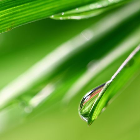big water drop on grass blade photo