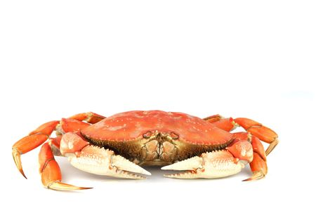 dungeness crab isolated on white Stock Photo - 5955968