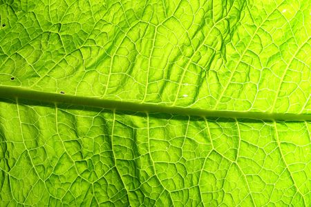 summer green leaf macro close up Stock Photo - 5956803
