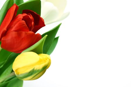 colorful tulips close up holiday background Stock Photo - 5956545