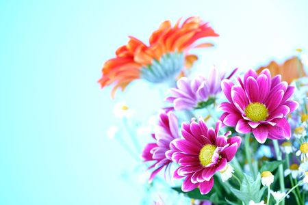 colourful summer flowers close up Stock Photo