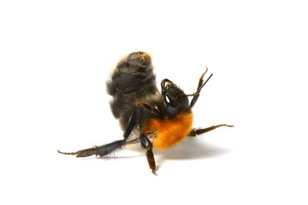 dance aerobic bumble bee isolated on white background Stock Photo - 6318242