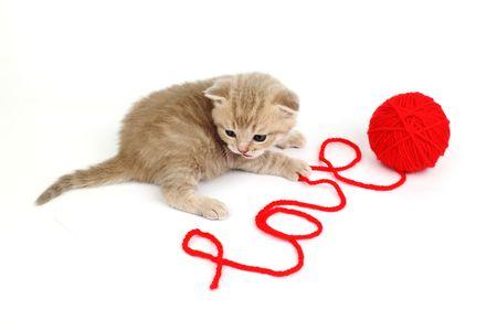 cat and wool sign love Stock Photo - 6315278
