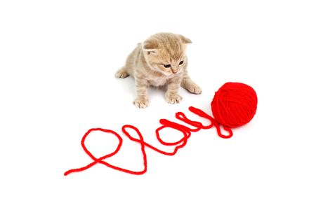 cat  play in red wool Stock Photo - 6315277