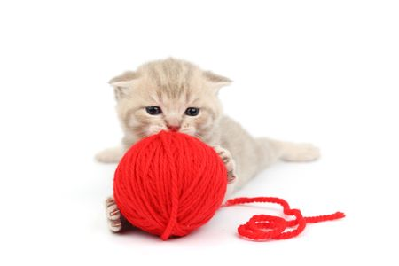 cat and red wool ball isolated on white Stock Photo - 6363817