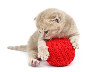 cat and red wool ball isolated on white Stock Photo - 6363814