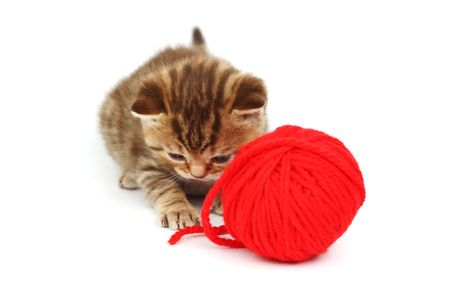 cat and red wool ball isolated on white photo