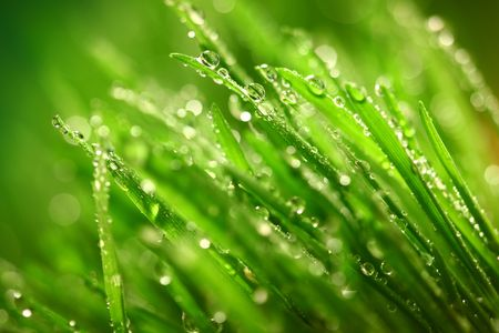 blade: water drops on grass blade nature background