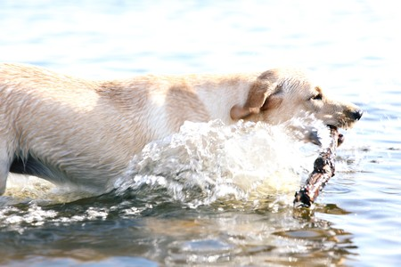 happy dog play in the water photo