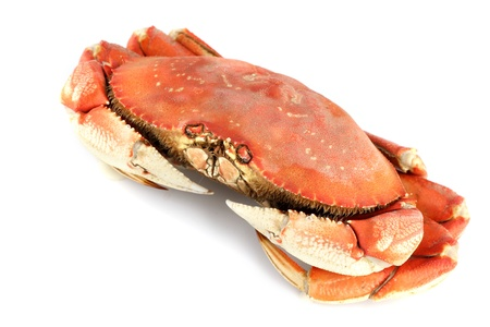 dungeness crab isolated on white Stock Photo - 8406910