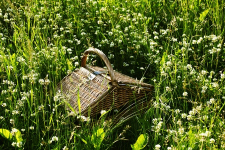picnic basket in green grass photo