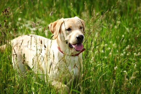 happy dog play in green grass Stock Photo - 8486560