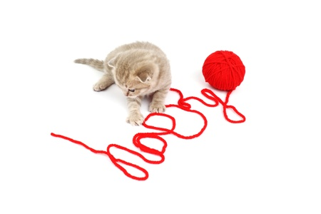 cat and wool sign happy Stock Photo - 8415711