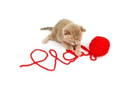 cat  play in red wool photo