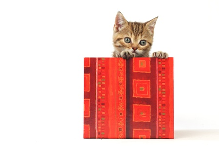 cat in gift box isolated on white background Stock Photo - 8415756