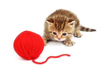 gomitoli di lana: palla di lana rossa e gatto isolata on white