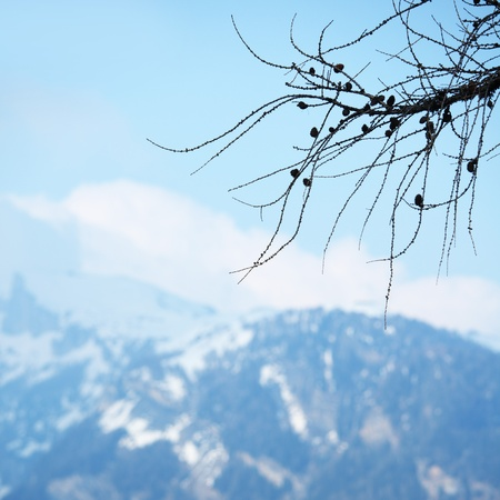 spring alps mountains scene background Stock Photo - 8453528