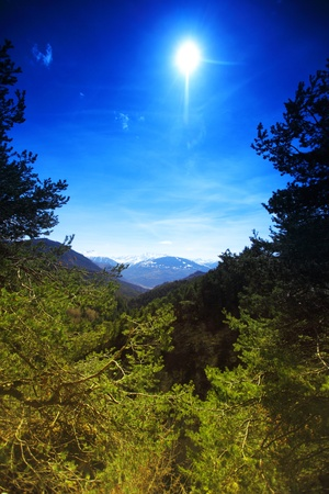 alpen mountain forest sun shine Stock Photo - 8525642