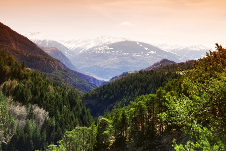 alpen mountain forest sun shine Stock Photo - 8453728