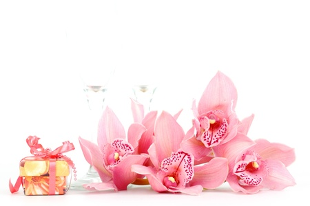 orchid isolated on white background Stock Photo - 8453296