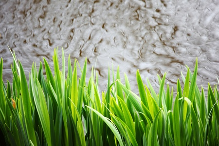 grass on water background photo