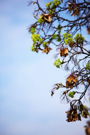 branches on a background of blue sky Stock Photo - 8453749