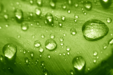 macro waterdrop on blossom green flower photo