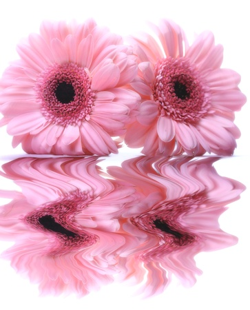 beautiful flower reflection on white photo