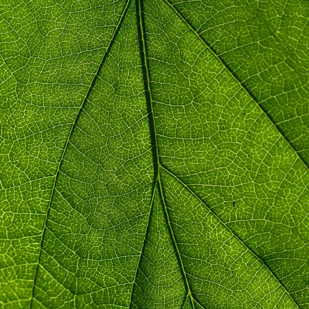 summer green leaf macro close up Stock Photo - 8516776