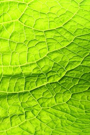summer green leaf macro close up Stock Photo - 8516754